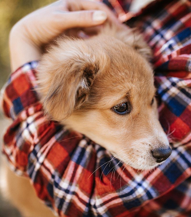 Luxury Boarding at Pet's Choice Animal Hospital