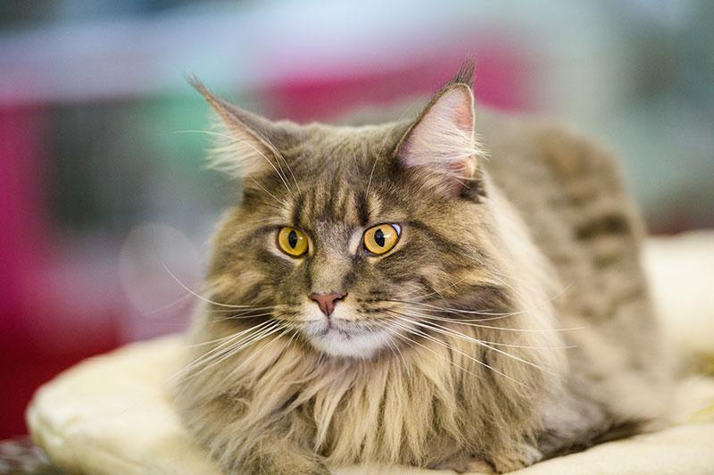 Advanced Pet Diagnostic Care