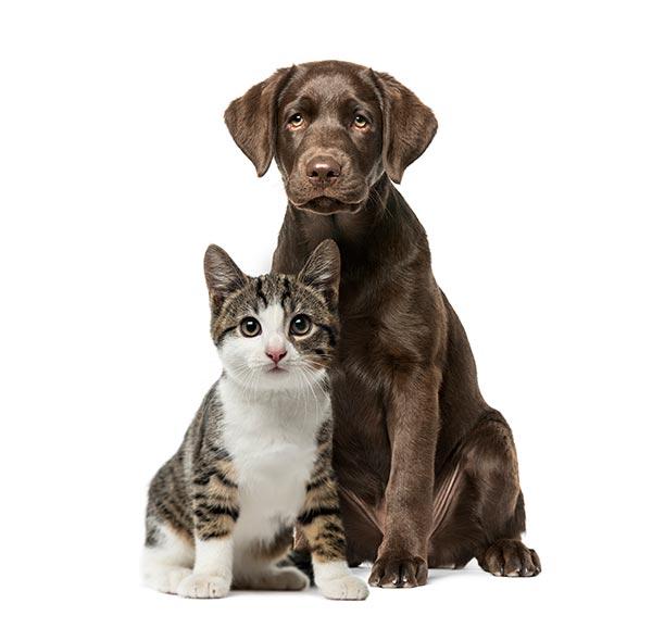 Dog and Cat Playful