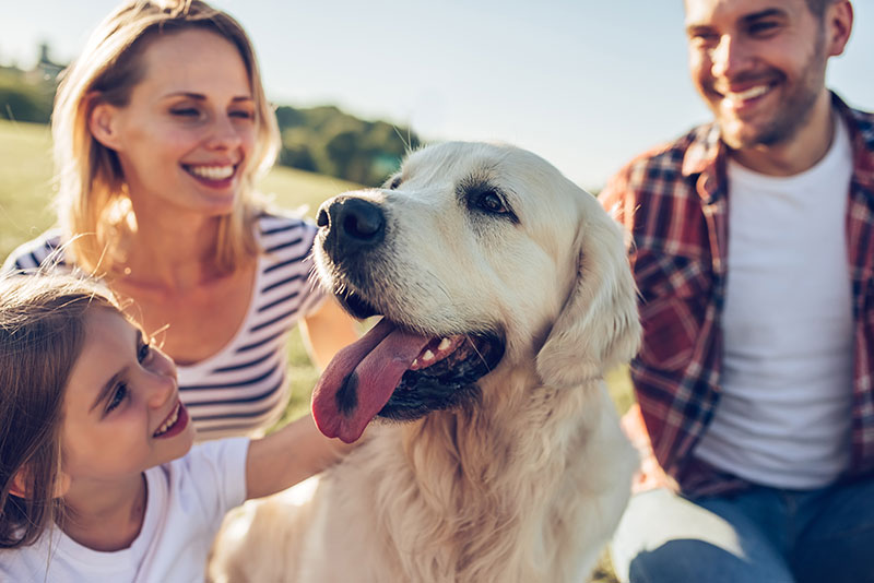 Comprehensive Care for Sick Pets